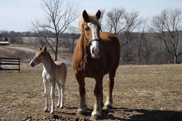 معنی واژه اسب