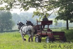 Grey Feather Farm